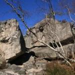 Falaise de Fontainebleau – Les gorges d'Apremont -