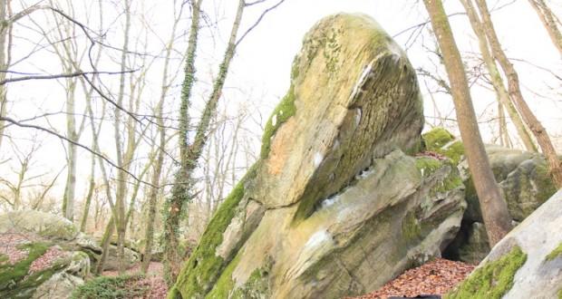 Falaise de Fontainebleau – Petit Bois -